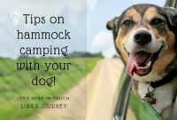 Hammock Camping With Dog : Awesome Tips For You